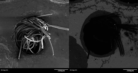 Figure 2. SEM images formed from secondary electrons (left) and backscattered electrons (right) showing topography/surface roughness and elemental differences, respectively